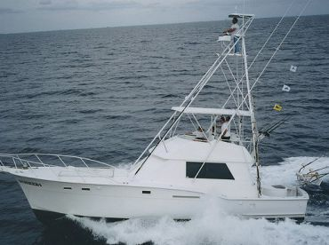 Mark The Shark - 50ft Striker 1, Miami