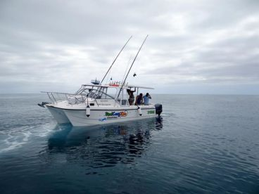 ReelCrayZee Charters, Cairns