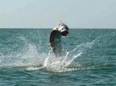 Boneafide Fishing Charters Fl Keys, Big Pine Key