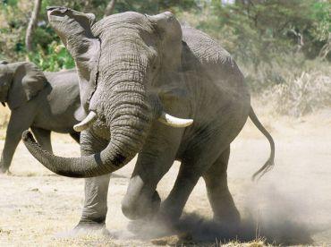 Allan Dadford Safaris , Caprivi