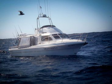 Sharkmen Fishing Charters Melbourne, Carrum