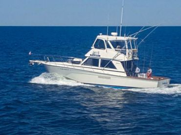 BarbGail Sportfishing - BarbGail IV, Brielle
