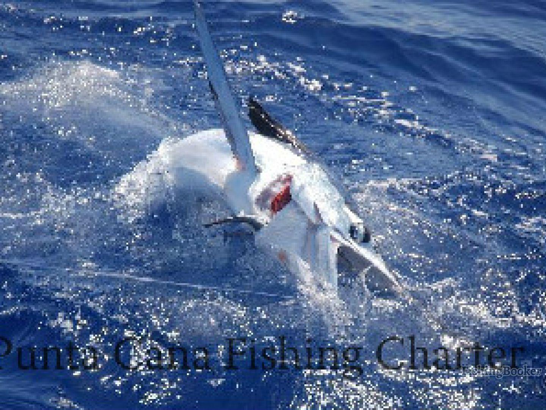 Fishing punta cana intrepido punta cana dominican for Dominican republic fishing