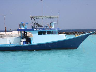 Dharavandhoo stay fishing tour , Dharavandhoo