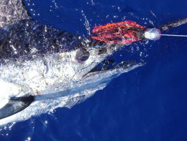 Ocean4You Offshore Fishing Charters, Tavira