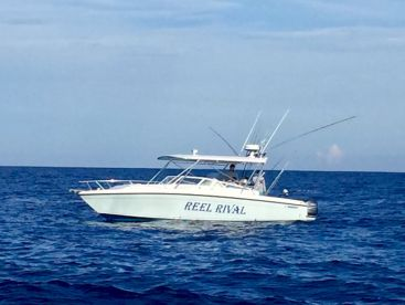 Reel rival charters boynton beach florida for Boynton beach fishing charters
