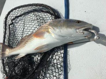 Set Da Hook Fishing LLC, Jacksonville