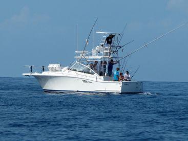 Captain Tony B on Veni Vidi Fishi, Bouillante
