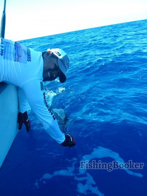 Galileo Caught Another Sailfish Canc N Fishing Report
