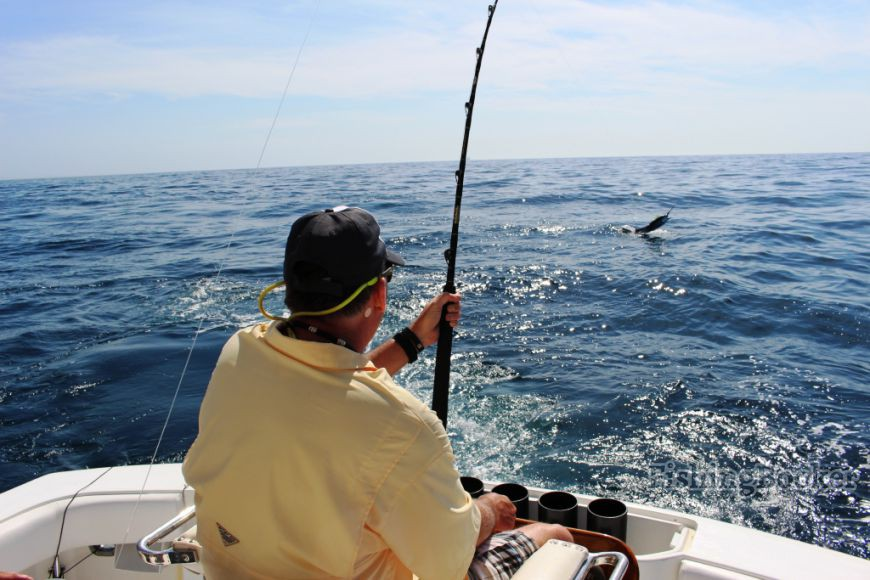 Cabo stripers and la paz black marlin cabo san lucas for Cabo san lucas fishing report