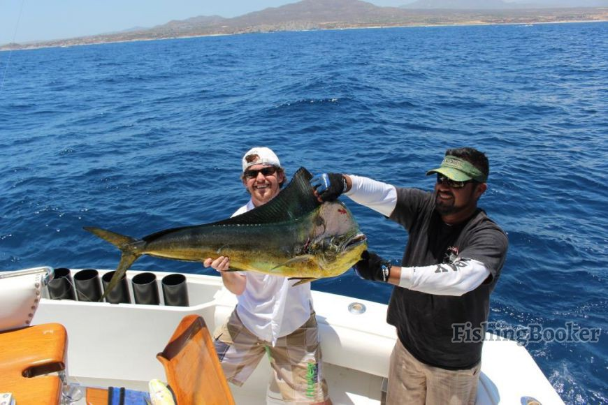 Great marlin action and dorado too cabo san lucas for Seven b s fishing report