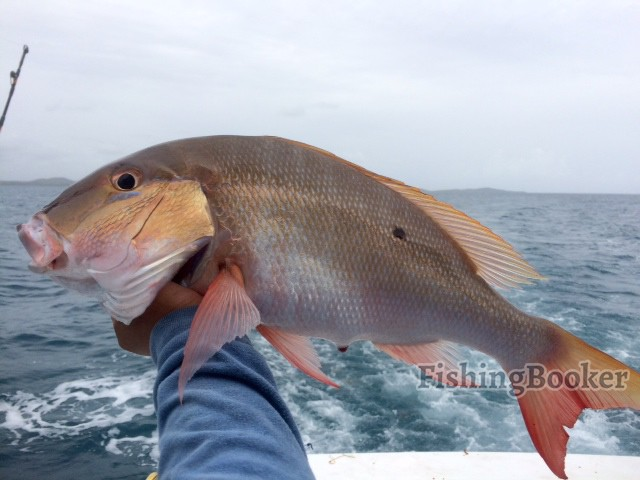 July moon report bill wraps fishing 2015 fajardo fishing for Lunar fishing forecast