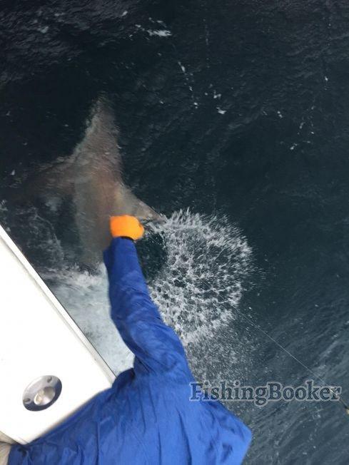 Shark saturday destin fishing report for Destin shark fishing