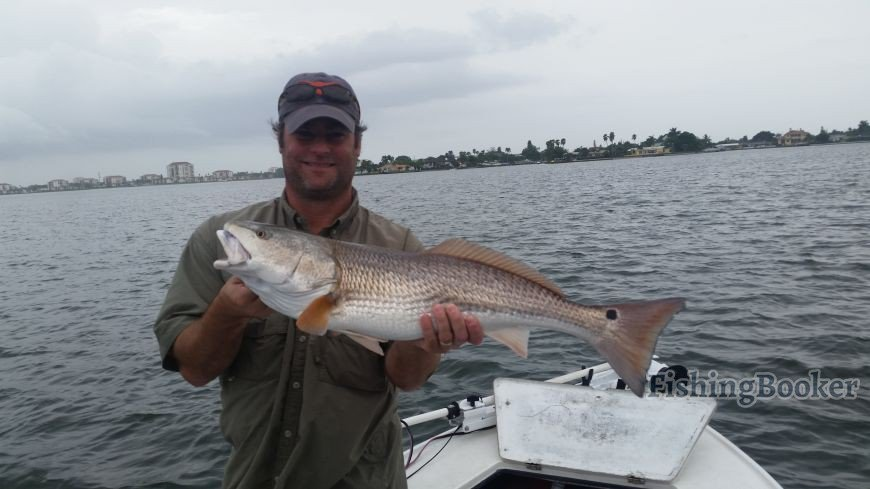 Redfish bonanza st petersburg fishing report for St pete fishing report
