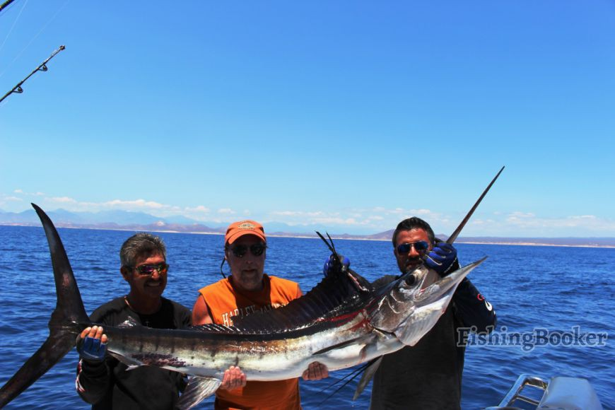 Big Black And Great Blue Marlin Action Cabo San Lucas