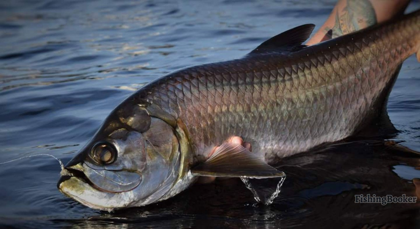 Boca grande fishing reports for Caloosahatchee river fishing