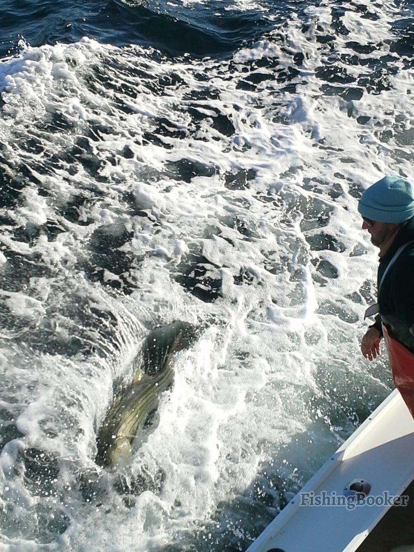 Montauk fall big bass goin off montauk fishing report for Montauk fishing report
