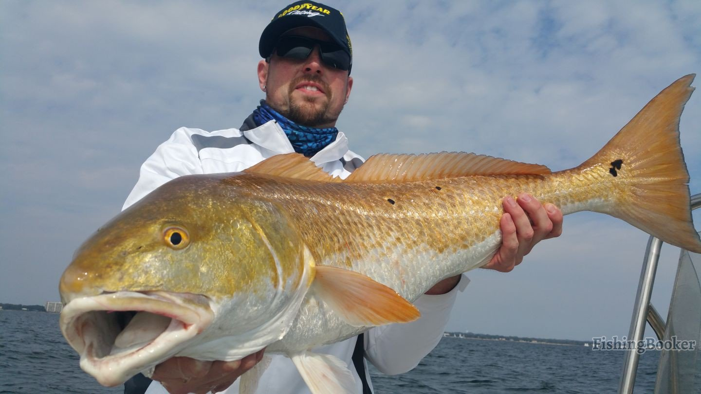 Absolutely insane fishing pensacola fishing report for Pensacola fishing forecast