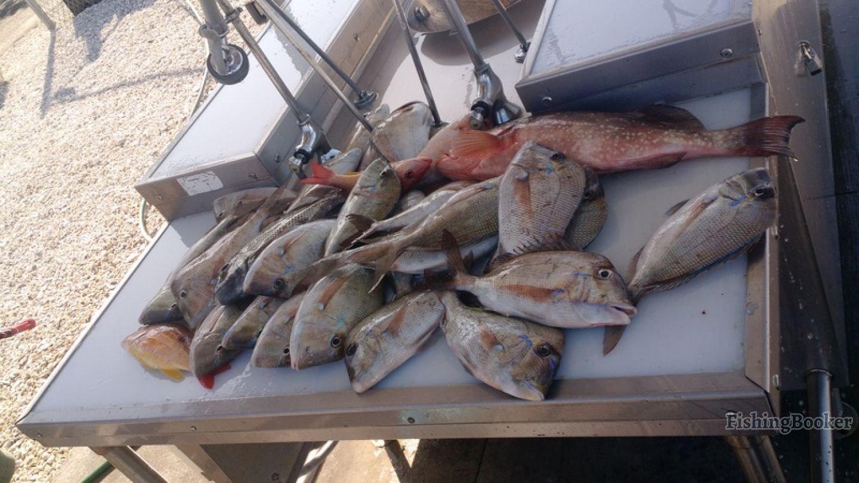 12 28 half day sore arms cape coral fishing report for Cape coral fishing report