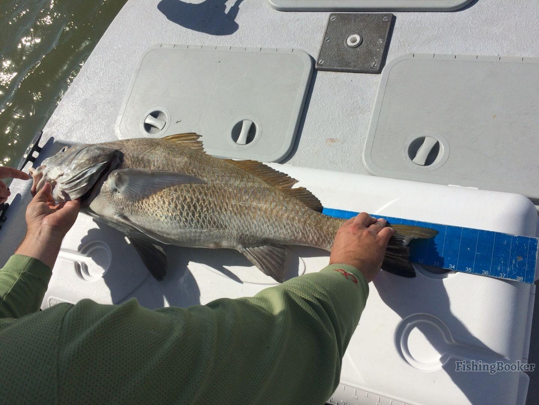 Excellent redfish and drum bite corpus christi fishing for Fishing report corpus christi texas
