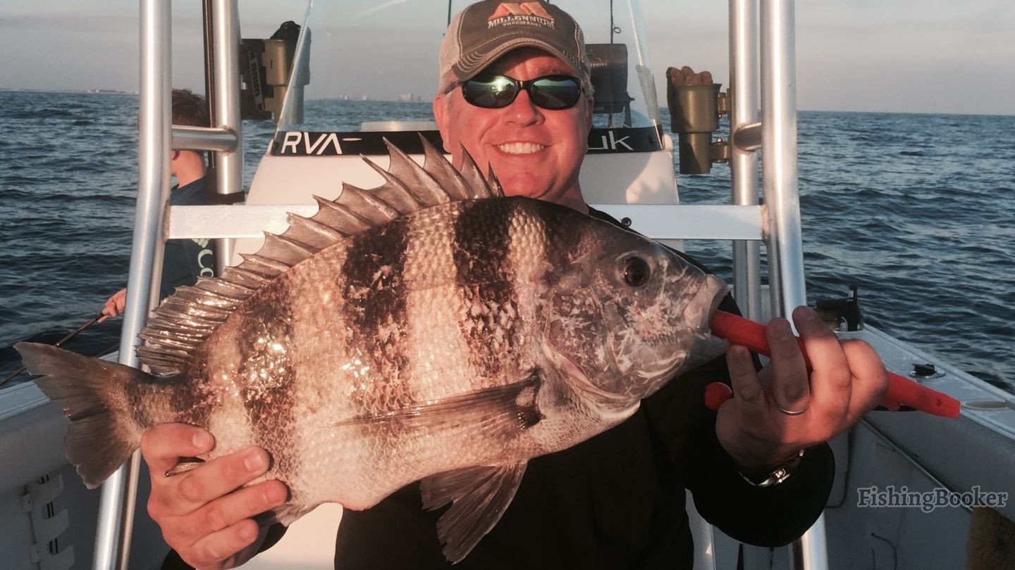 The sheepshead are back in town pensacola fishing for Pensacola fishing forecast