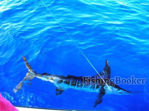 El budster fishing report cabo san lucas fishing report for Cabo san lucas fishing report