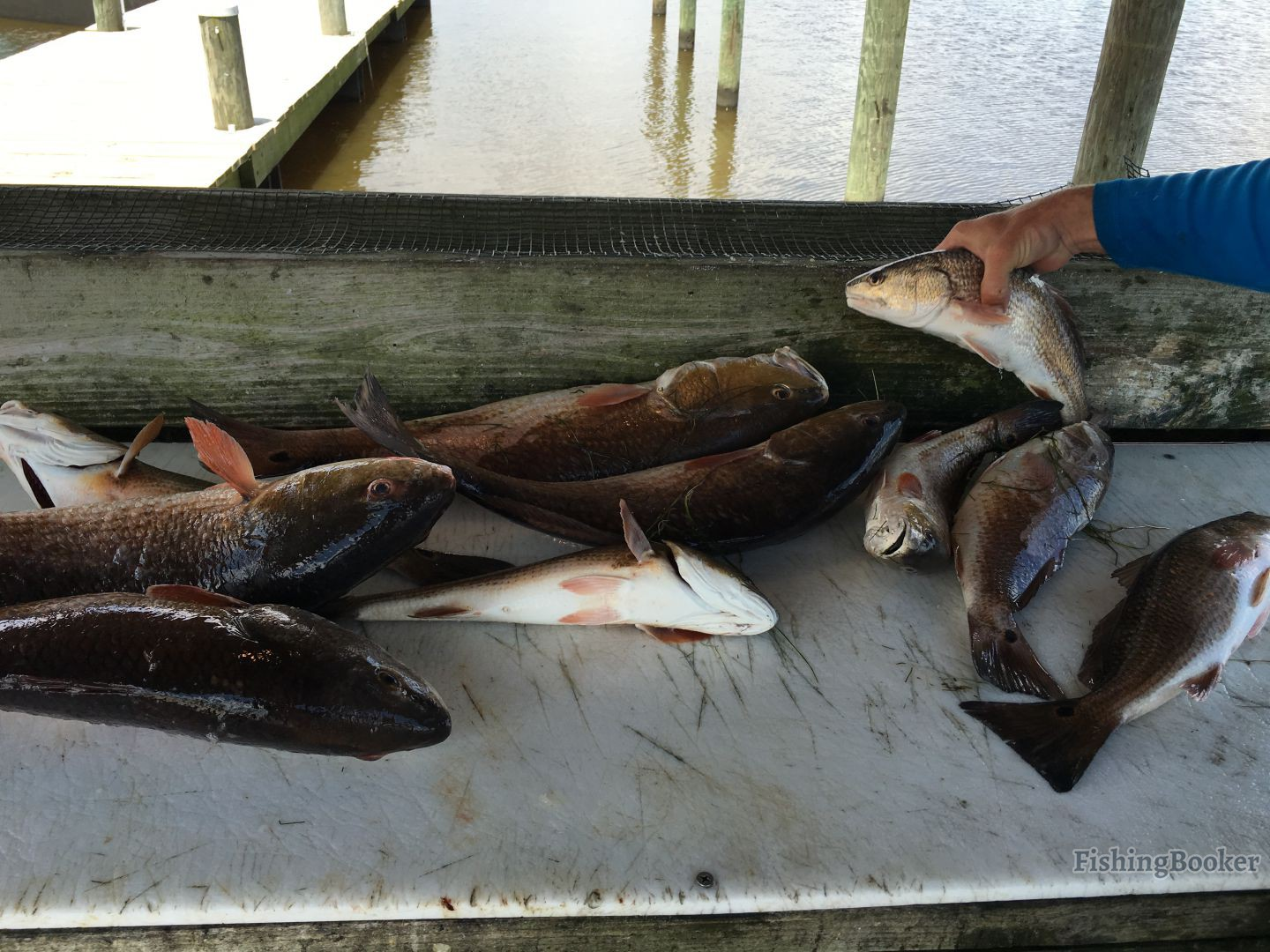 Redfish kayak adventures llc port sulphur louisiana for Captain d s country style fish